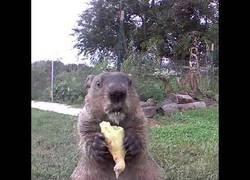 Enlace a Te roban las verduras, pones una cámara y encima te vacilan así