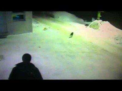 Un gato rezagado pide indicaciones