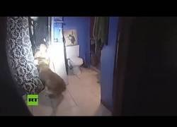 Enlace a Un perro policía saca a la fuerza de la bañera a un sospechoso