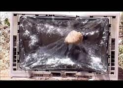 Enlace a Apedreando un televisor  antiguo