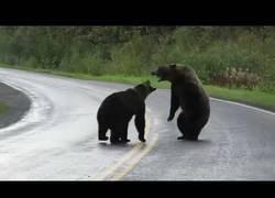 Enlace a Dos osos muy gallitos