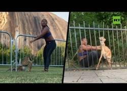 Enlace a La atleta Chloe Dorsey salva a un cervatillo DOS VECES