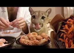 Enlace a Me pareció ver un lindo gatito que come mejor que yo