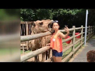 Un camello casi se merienda a una pobre chica que solo quería un selfie