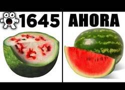 Enlace a Alimentos que han evolucionado a lo largo del tiempo