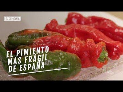 Este es el tipo de pimiento más frágil que existe en España