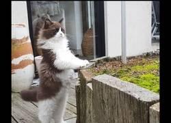 Enlace a Reacción de un gato bebé al pisar la calle por primera vez