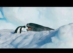Enlace a La persecución de una foca leopardo para comerse a un pingüino es el mejor thriller que verás en mucho tiempo