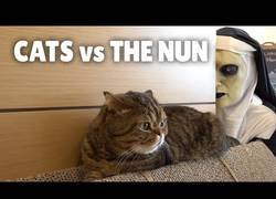 Enlace a Dando sustos de muerte a gatos por Halloween