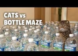 Enlace a Gatos enfrentándose a un laberinto de botellas de agua