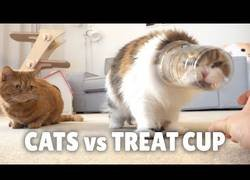 Enlace a Gatos enfrentándose a vasos de plástico
