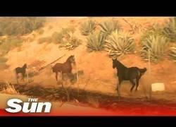Enlace a Un caballo acude al rescate de otros dos equinos durante los incendios en California