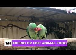 Enlace a Cuando los animales y la comida se cruzan