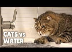 Enlace a ¿Es cierto que los gatos temen al agua?