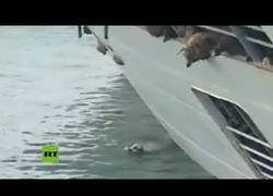 Enlace a Vuelca un barco que transportaba cerca de 15.000 ovejas