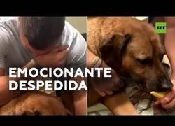 Enlace a Tim Tebow, jugador de fútbol americano en los New York Mets llora mientras da de comer a su perro por última vez
