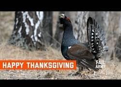 Enlace a Cuando el Día de Acción de Gracias se te complica