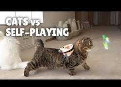 Enlace a Gatos jugando con ellos mismos