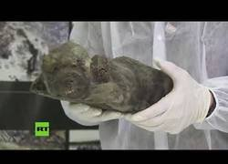 Enlace a Encuentran los restos de un cachorro de 18.000 años de antigüedad