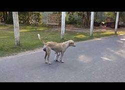 Enlace a Un perro amamanta a un gato hambriento