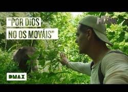 Enlace a Wild Frank se topa con unos elefantes asiáticos