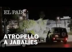 Enlace a Un conductor atropella a una familia de jabalíes en Almería