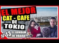 Enlace a El Bar Café de Tokio donde los gatos son los protagonistas
