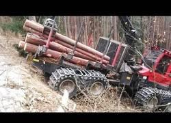 Enlace a Cómo cosechar madera en el bosque con equipos especiales