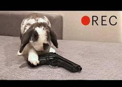 Enlace a Cuando tu conejo se queda solo en casa
