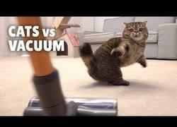 Enlace a ¿Es cierto que los gatos temen a la aspiradora?