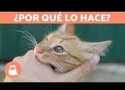 Enlace a ¿Por qué los gatos suelen morder después de lamernos la mano?