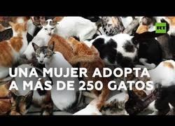 Enlace a Una mujer adopta a más de 250 gatos
