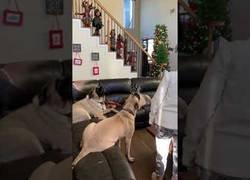 Enlace a Unos perros se unen a cantar el Cumpleaños Feliz