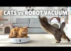 Enlace a La reacción de estos gatos ante un robot aspirador