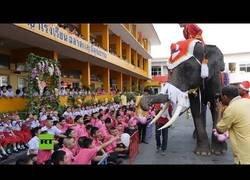 Enlace a Elefantes disfrazados de Papá Noel entregan regalos a niño en Tailandia