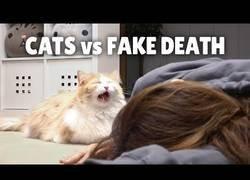 Enlace a ¿Cómo reaccionaría tu gato si te viera morir?