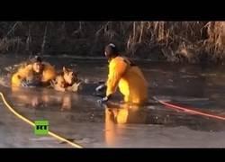 Enlace a Rescatan a un perro que había quedado atrapado en un estanque helado