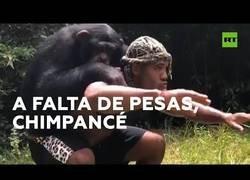 Enlace a Un mono ayuda a un humano a entrenarse