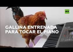 Enlace a Entrena a una gallina para que pueda tocar el piano