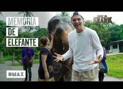 Enlace a Una elefanta se vuelve loca al volver a ver a Frank Cuesta tras su nacimiento
