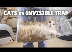 Enlace a Una trampa invisible para gatos