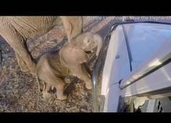 Enlace a Un elefante bebé analiza un coche todoterreno