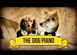 Enlace a ¡Talento puro! Youtuber realiza música con ladridos de perro