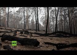 Enlace a Brutal 'tormenta de fuego' sorprende a los bomberos durante los incendios en Australia
