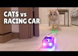 Enlace a ¿Cómo reaccionan los gatos ante coches de juguete?
