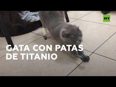 La gata que volvió a caminar gracias a cuatro protesis