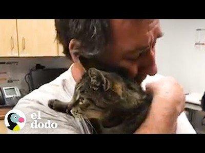 Se reúne con su gato al que había perdido hace 7 años