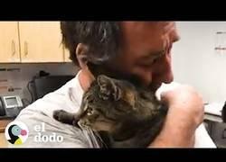 Enlace a Se reúne con su gato al que había perdido hace 7 años