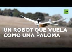 Enlace a Crean un robot que imita a la perfección el vuelo de un pájaro