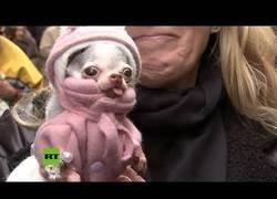 Enlace a La iglesia española que bendice mascotas